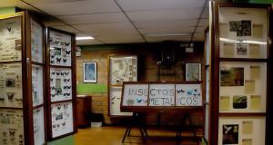Museo de Insectos